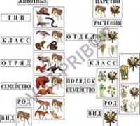 Классификация растений и животных