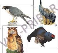 Многообразие хордовых Птицы