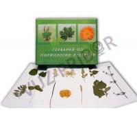 Морфология растений