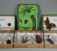 Голосемянные растения