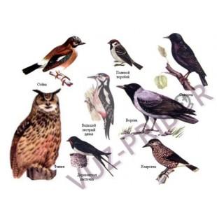 Комплект таблиц Курс животные