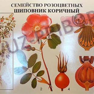 Комплект таблиц по ботанике