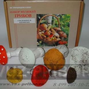 Набор грибов съедобных и ядовитых