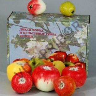 Дикая форма и культурные сорта яблони