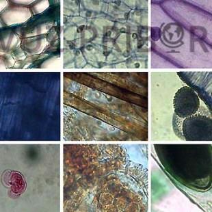 Ботаника 6-7 класс
