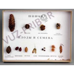 Шишки, плоды, семена, деревьев и кустарников